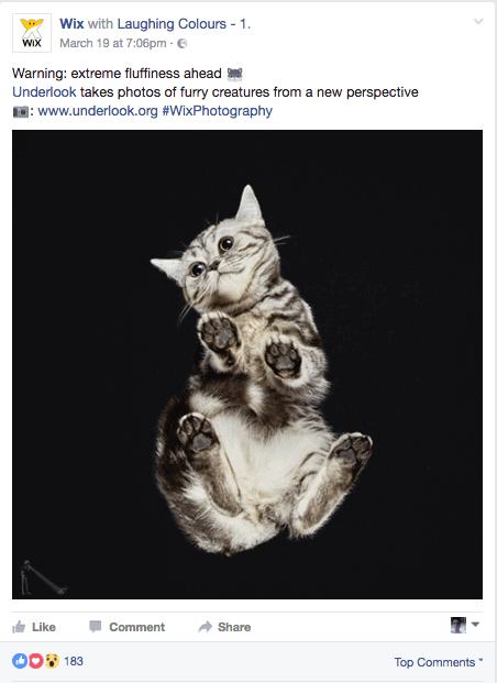 פייסבוק של WIX